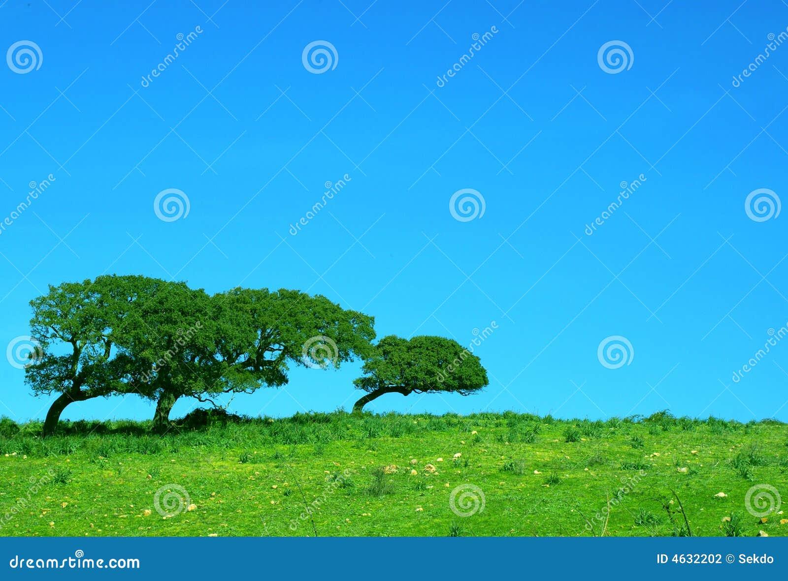 Przegięci korkowi drzewa