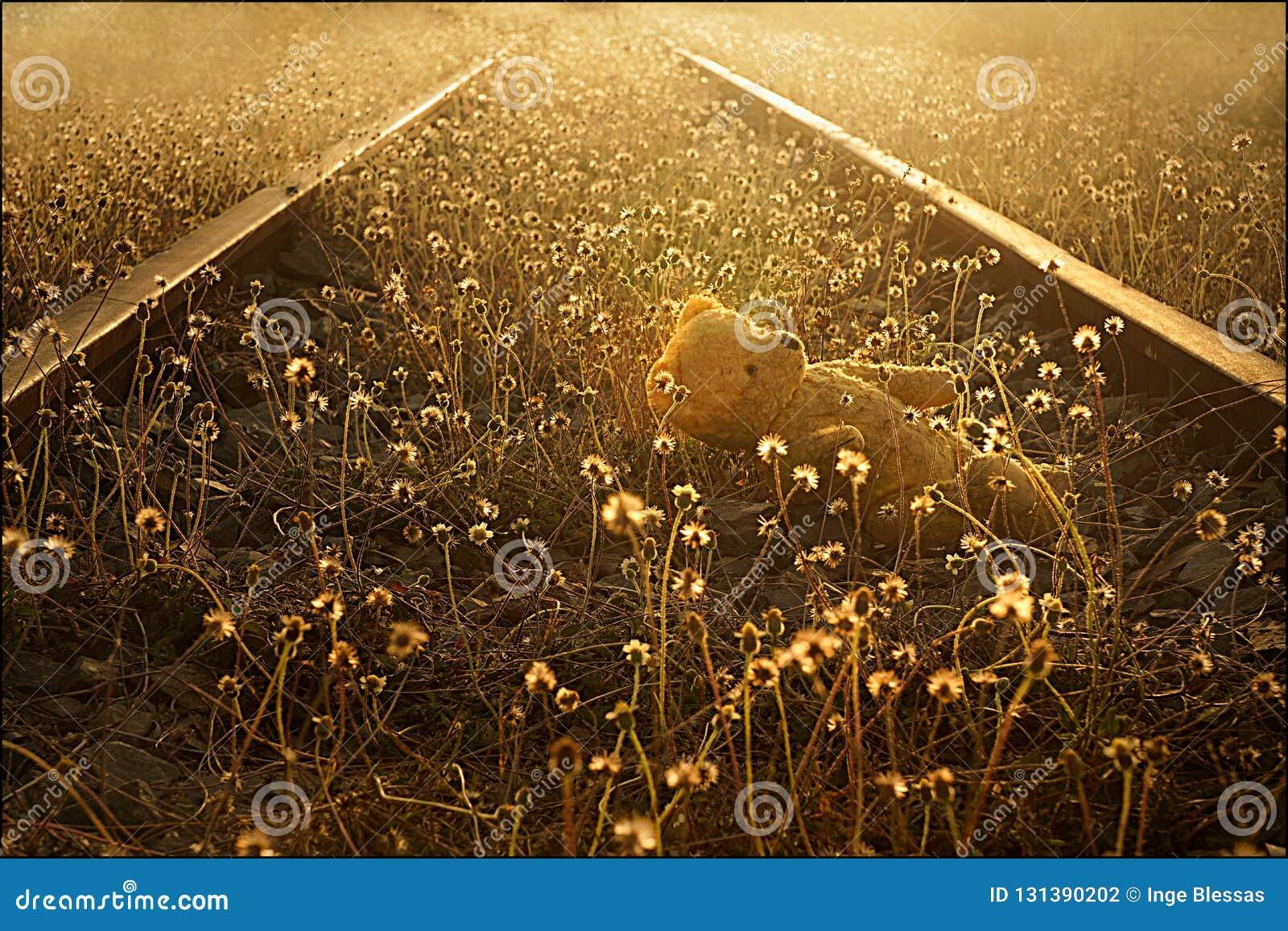 Przegrany miś na zaniechanych kolejowych śladach