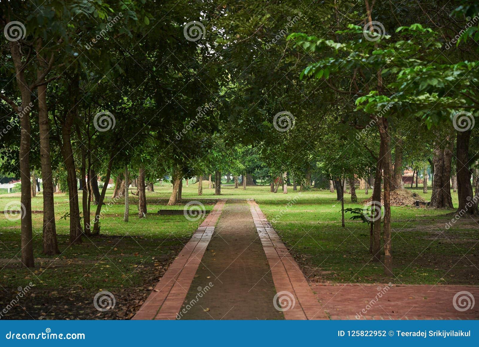 Przejście w parku przy Ayutthaya dziejowym parkiem