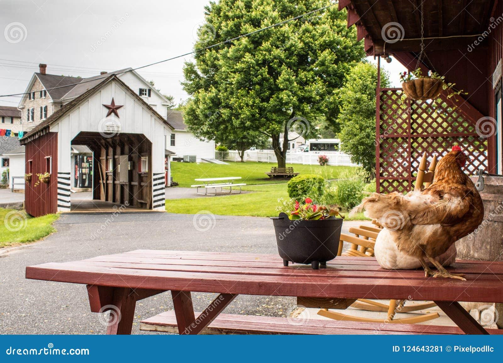 Przelotne spojrzenie tradycyjny styl życia w Amish wiosce, Pennsylwania