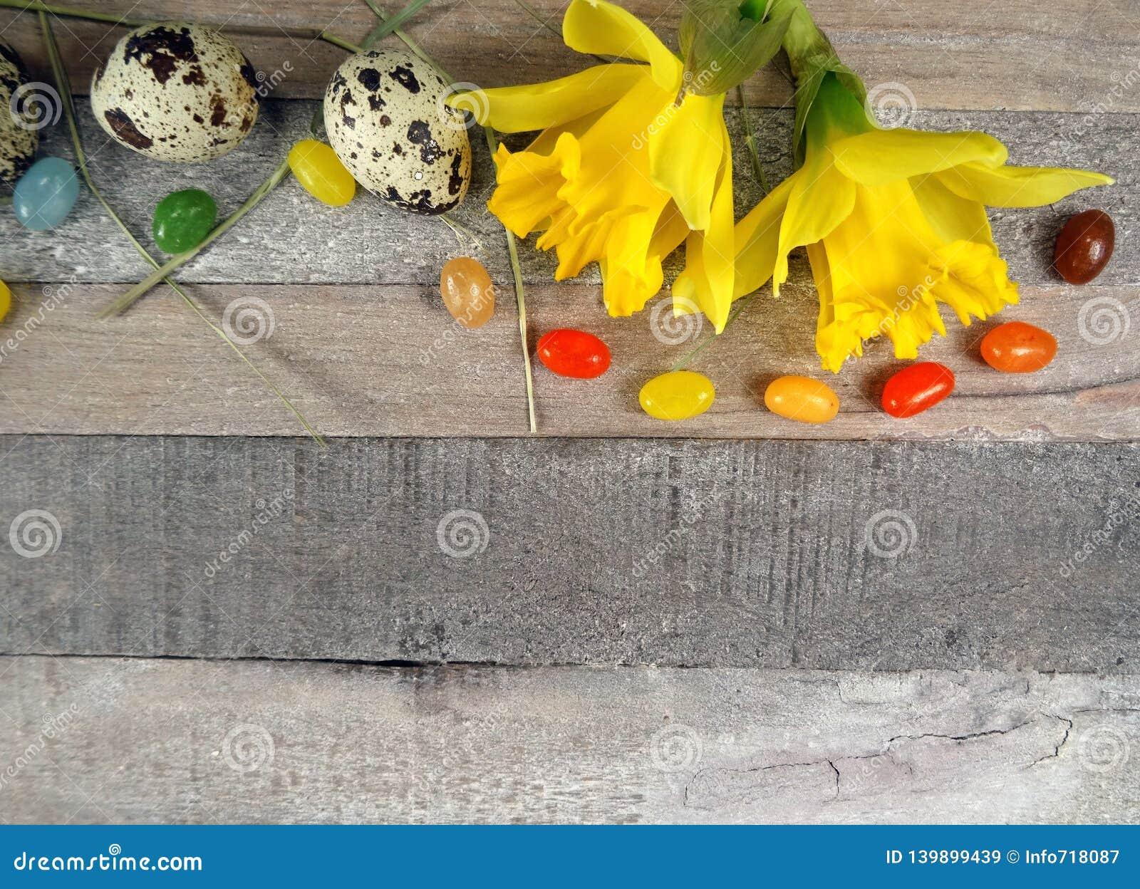 Przepiórek jajka z wiosny dekoracją dla Easter z narcyzem, daffodils przy drewnianym tłem/