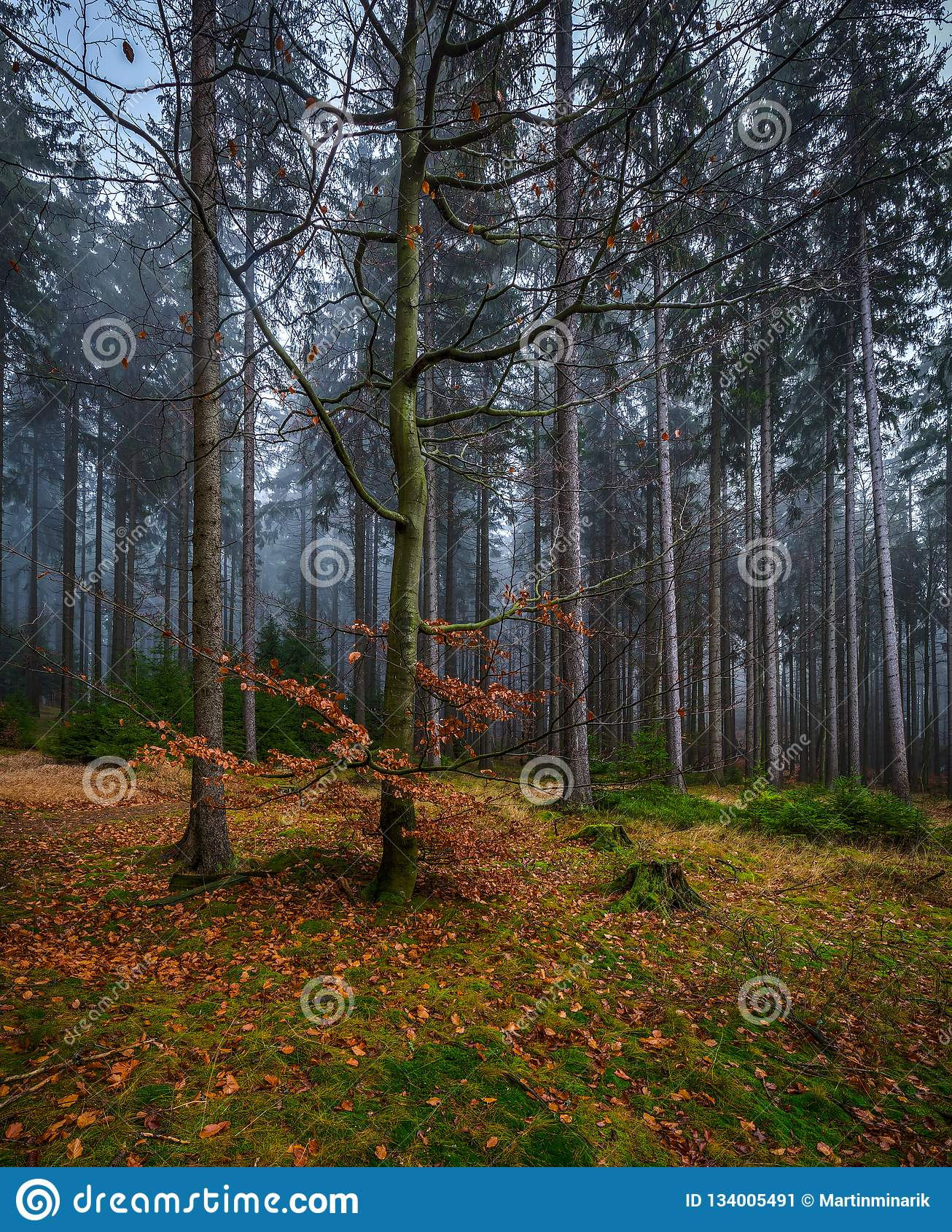 Przerażający tajemniczy las z zieloną trawą i kolorowymi spadać drzewami