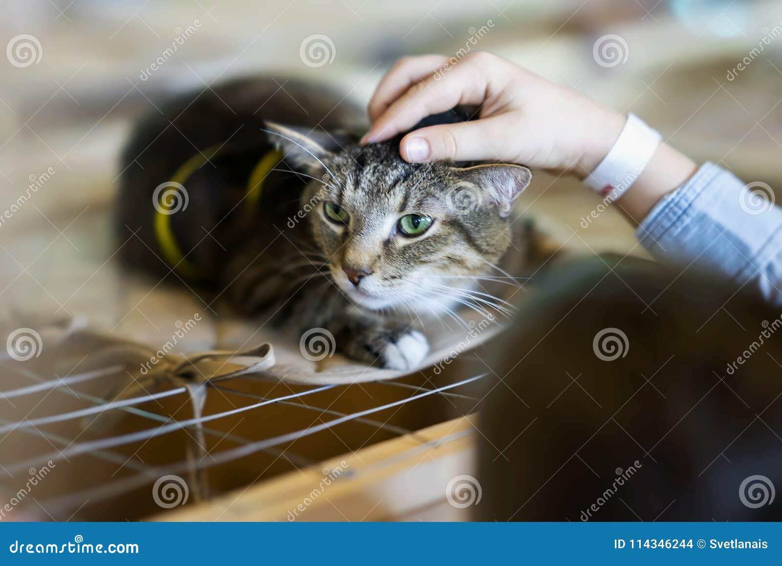Przestraszony bezdomny samotny kot z przelękłym spojrzeniem, kłama na klatce w schroniskowym czekaniu dla domu, dla someone adopt