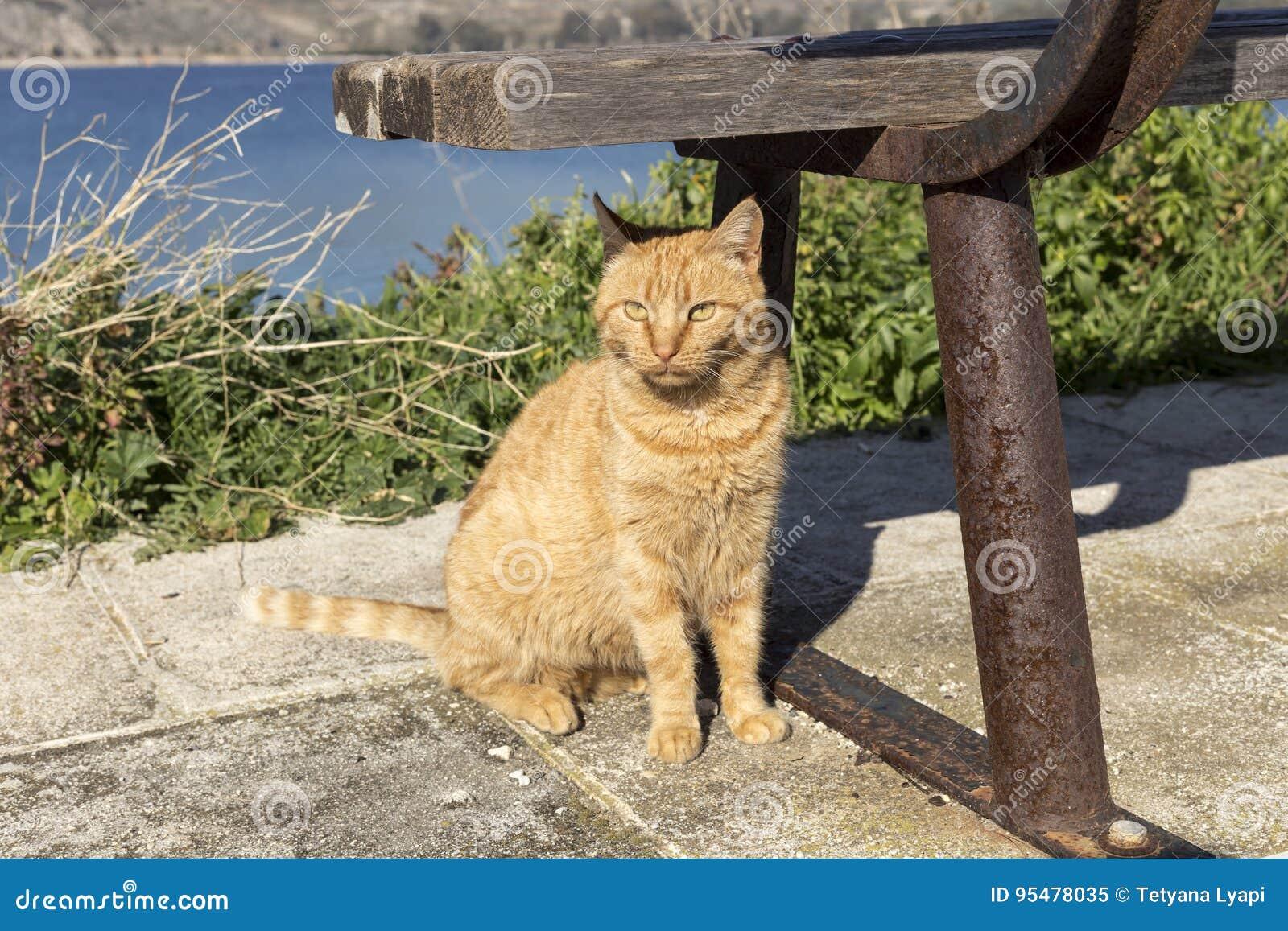Przewodzący kot