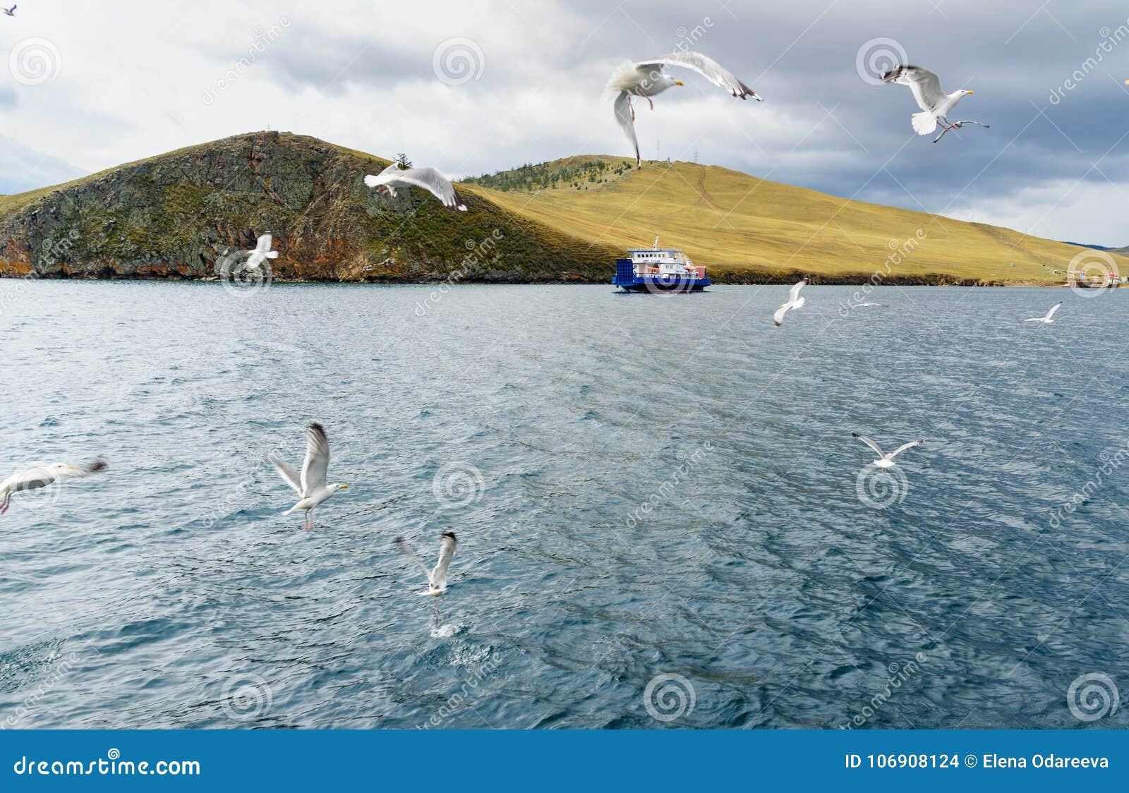 Przewozi Semen Batagayev między stałym lądem i wyspą Olkhon baikal jezioro Russia