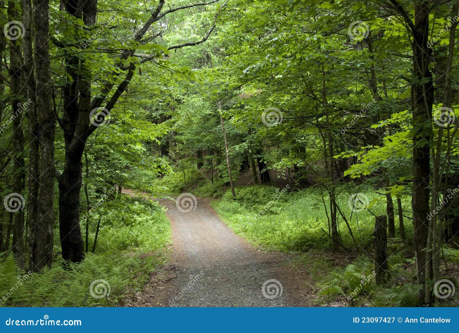 Przez Zielonego Lasu mała Droga