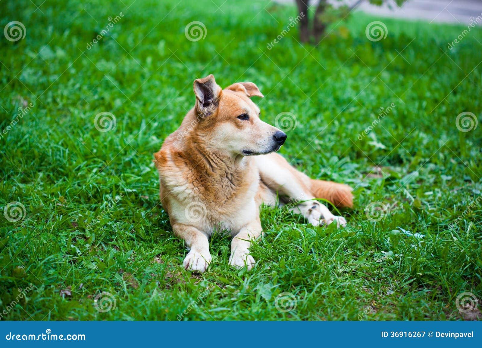 Przybłąkany pies