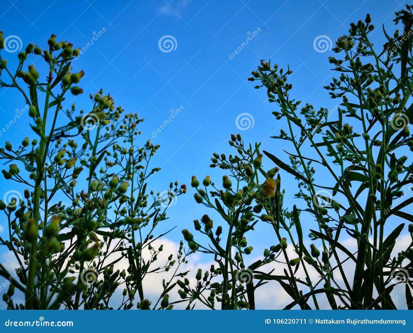 Przyglądający przy niebieskim niebem z obłocznym tłem przez naturalnego up