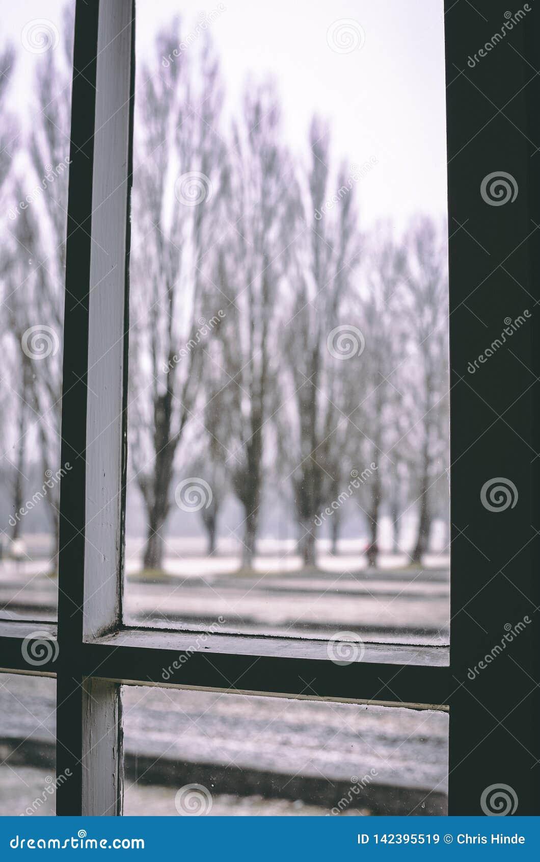 Przyglądający za okno od