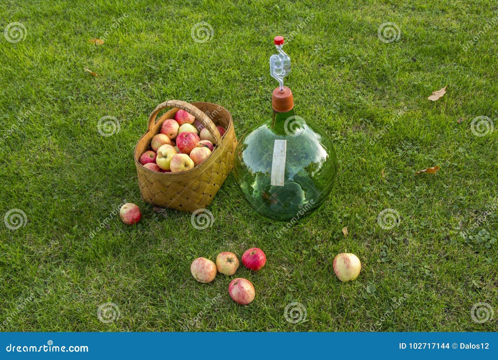 Przygotowywający dla robić domowego robić wina