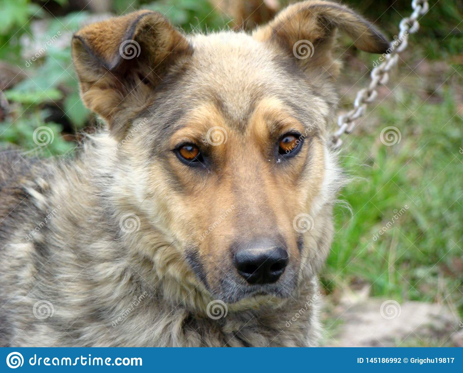 Przyjaciel istota ludzka psi target136_0_