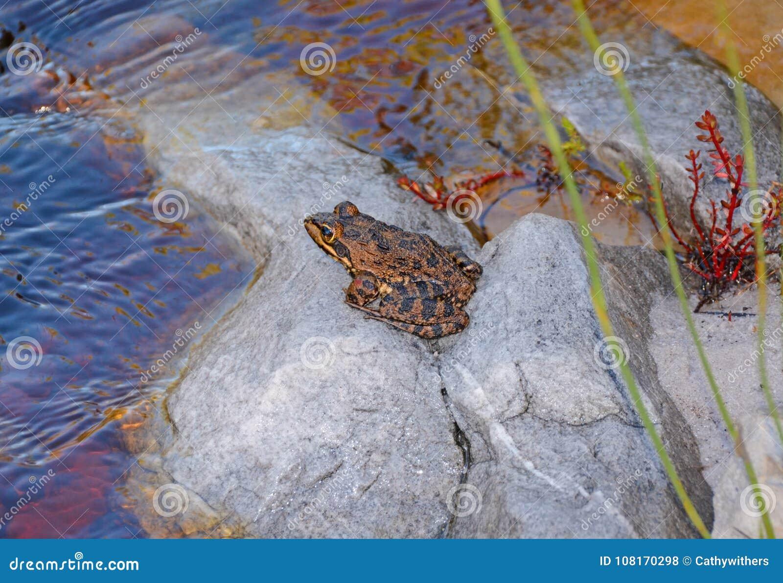 Przylądek rzeki żaba