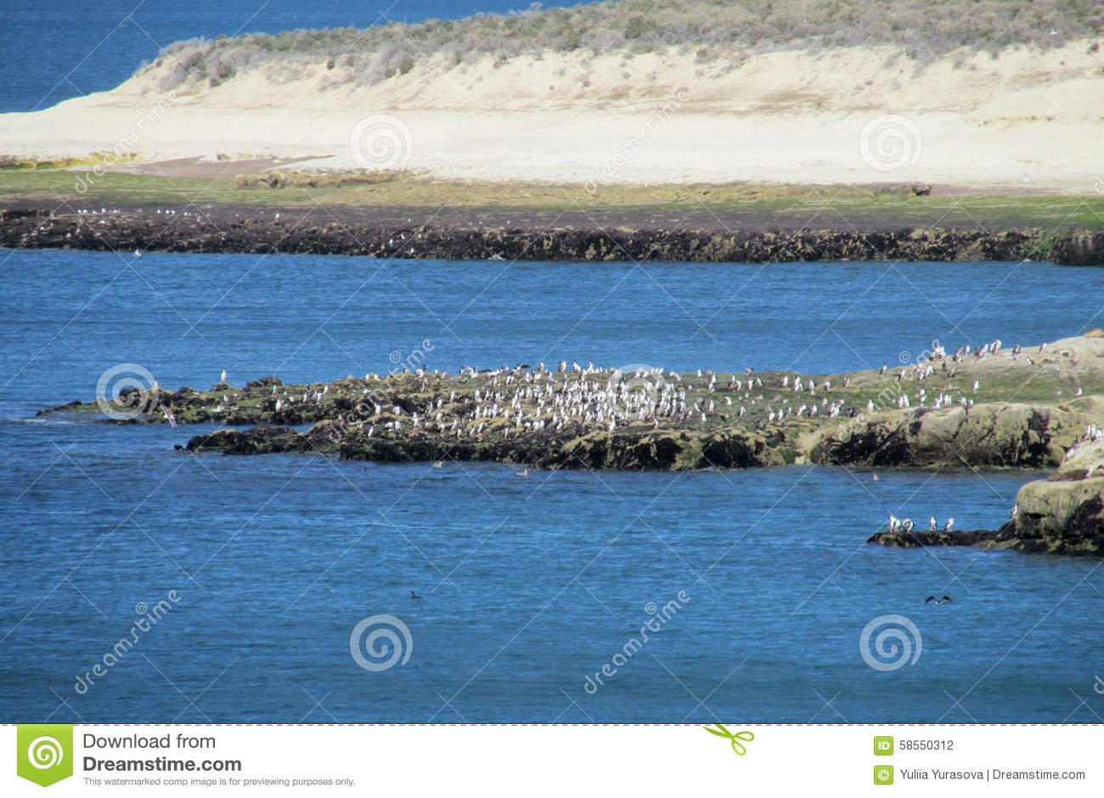 Przylądek z ptakami i białymi falezami w oceanie