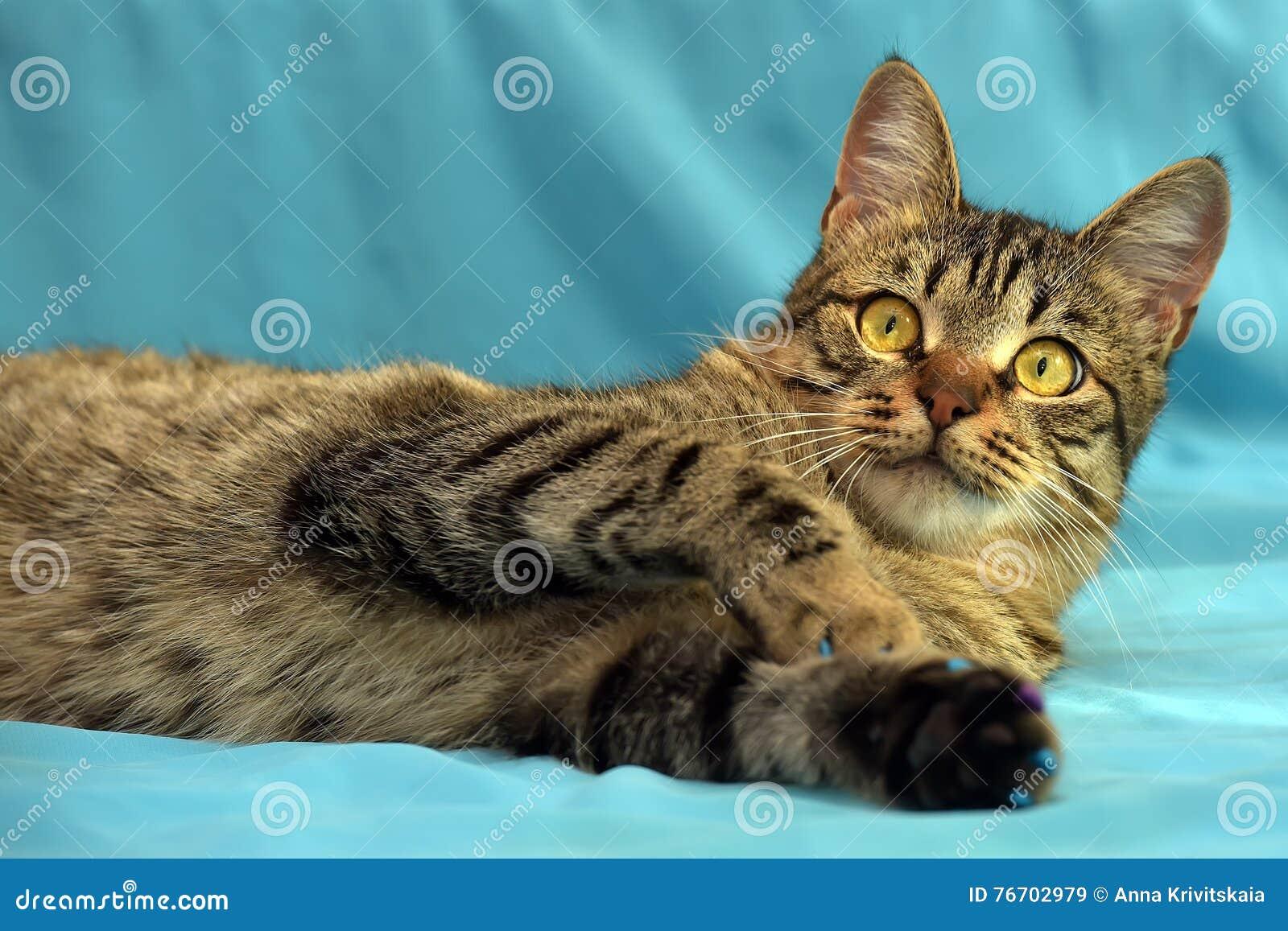 Przystojny młody tabby kot