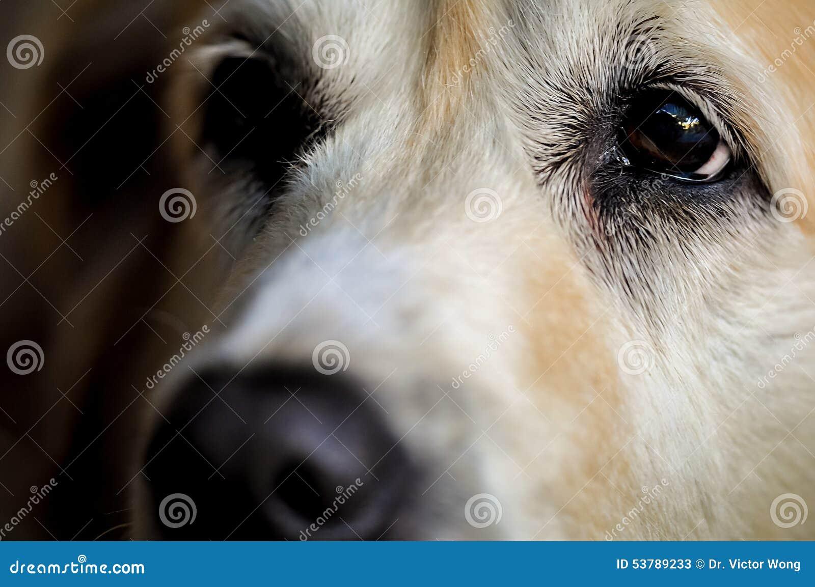 Psa oka up zakończenie