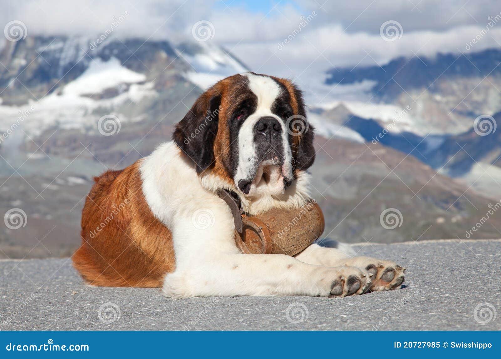 Psi bernard st