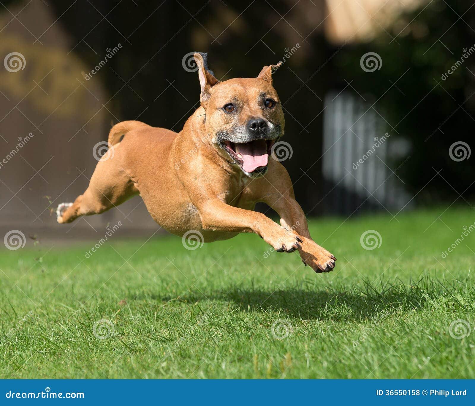 Psi bieg i przeskakiwać