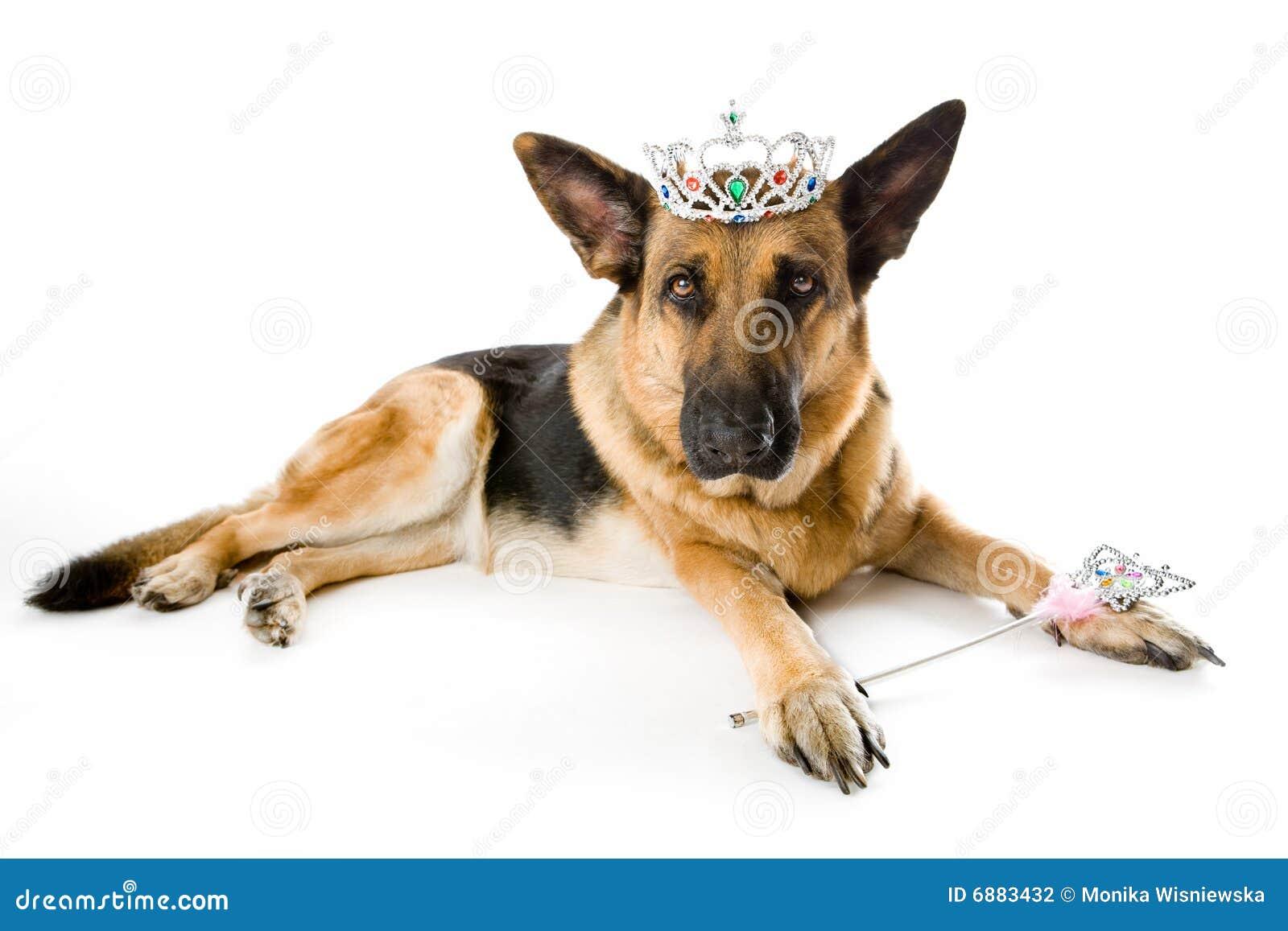 Psi czarodziejski princess