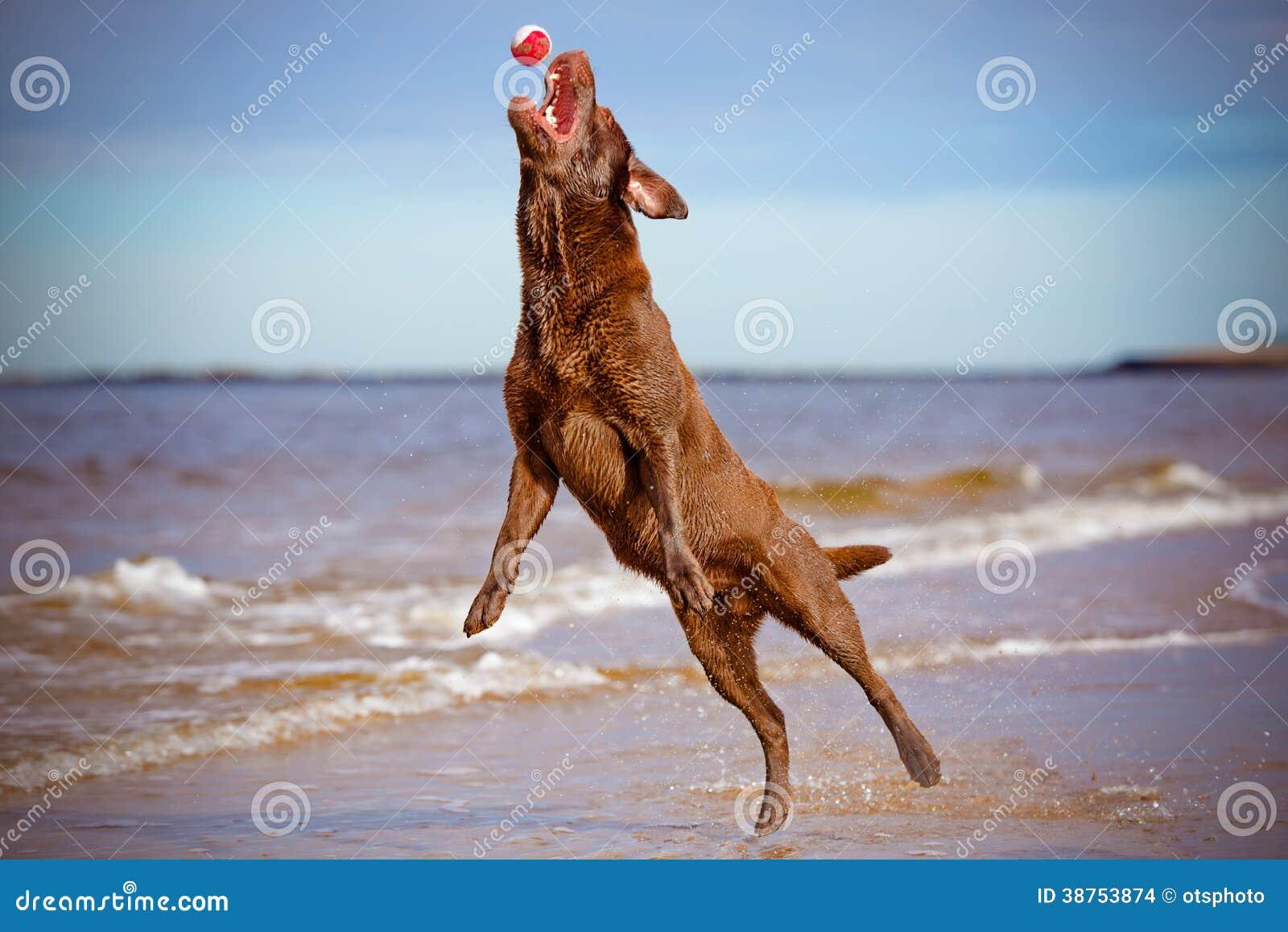Psi doskakiwanie chwyt up to piłka