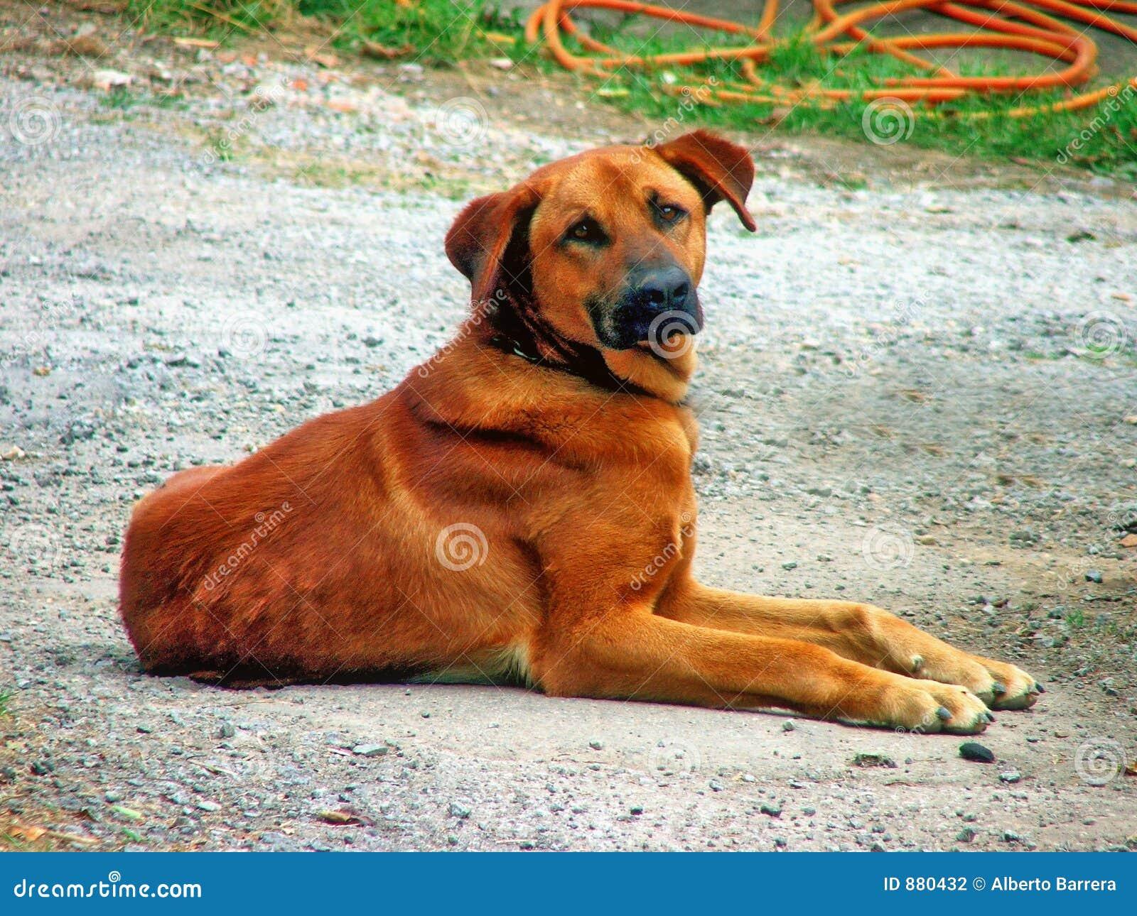 Psi gospodarstwa