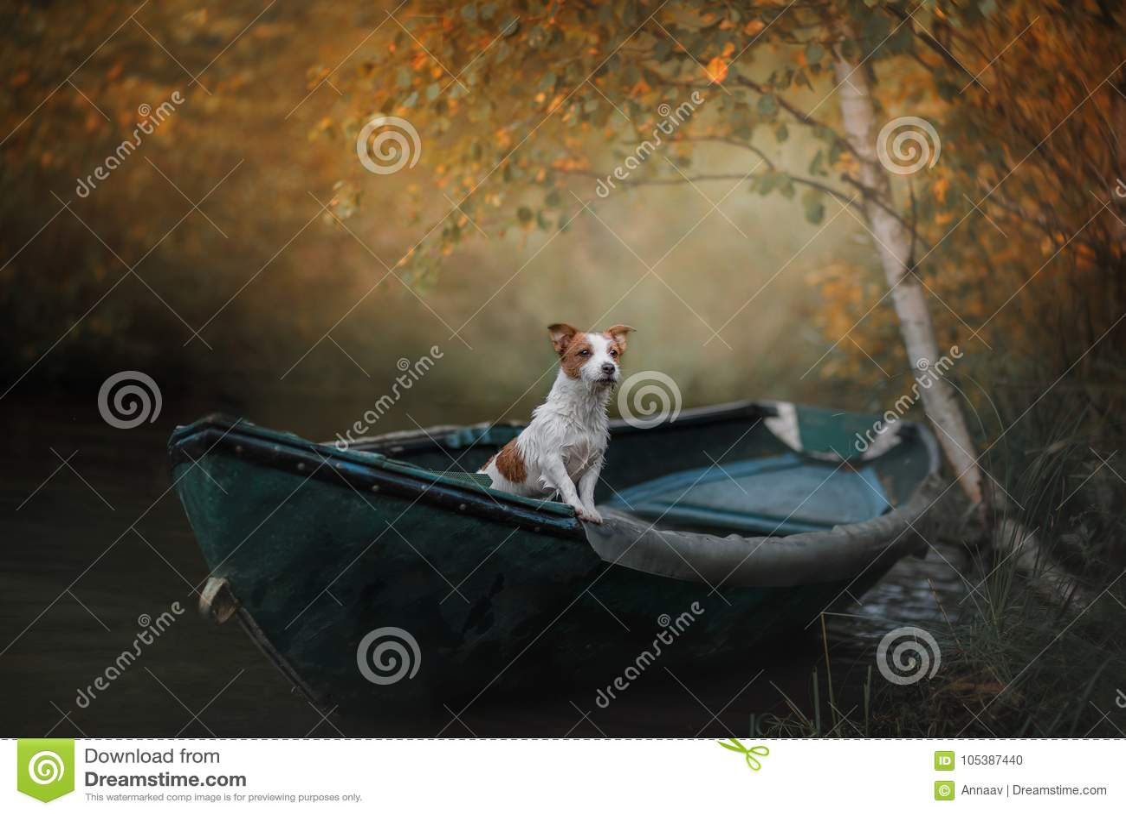 Psi Jack Russell Terrier w łodzi na wodzie