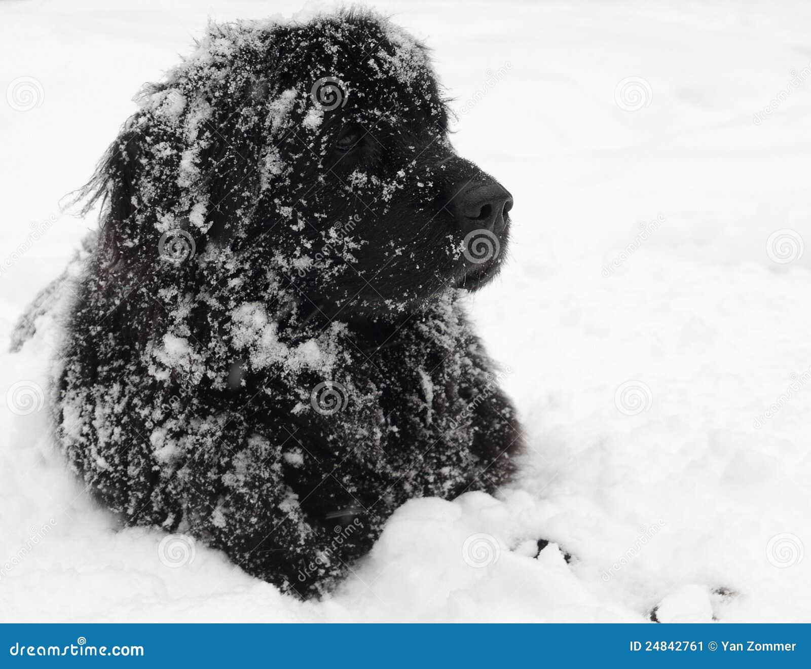 Psi Newfoundland