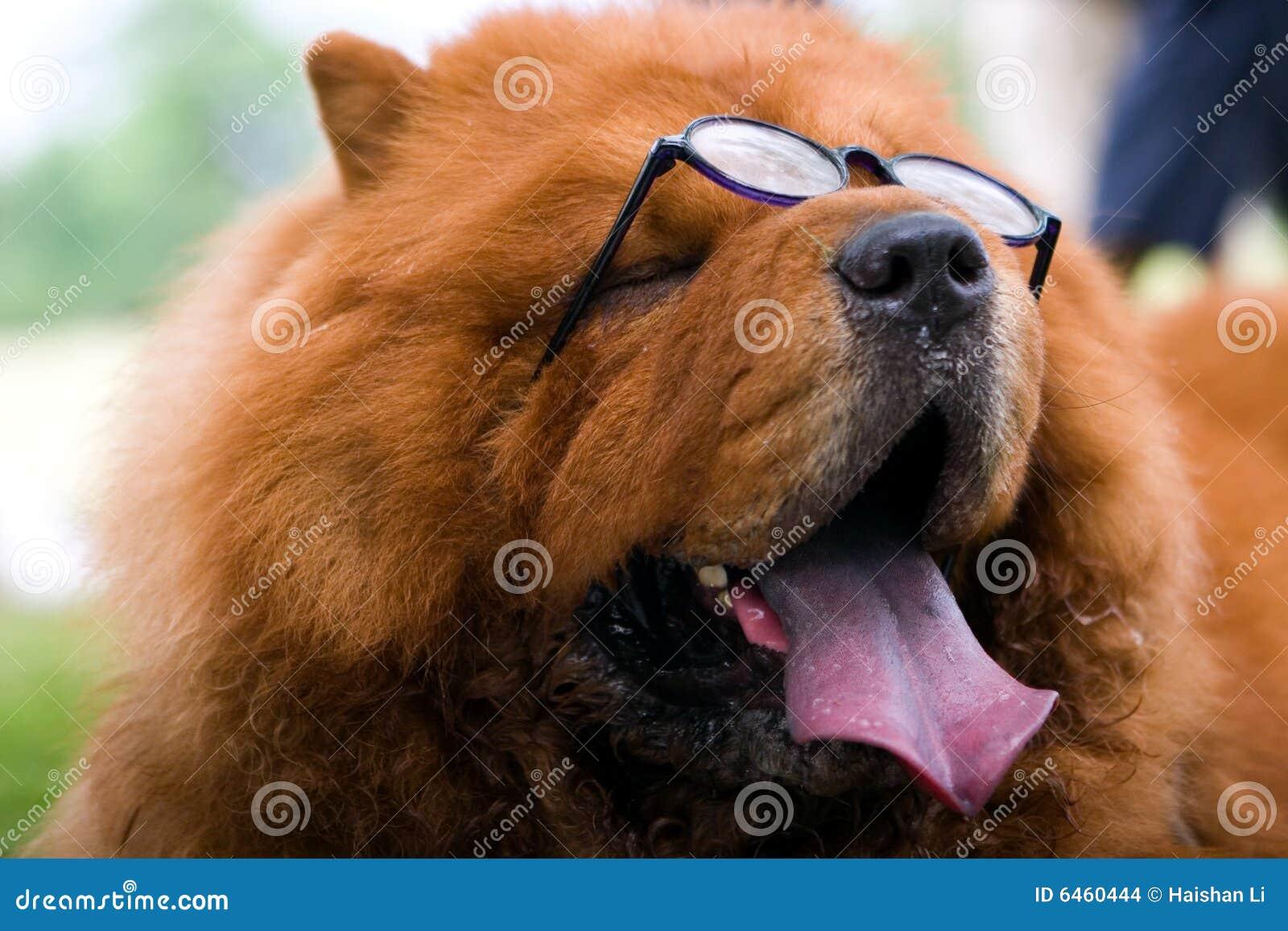 Psi okulary