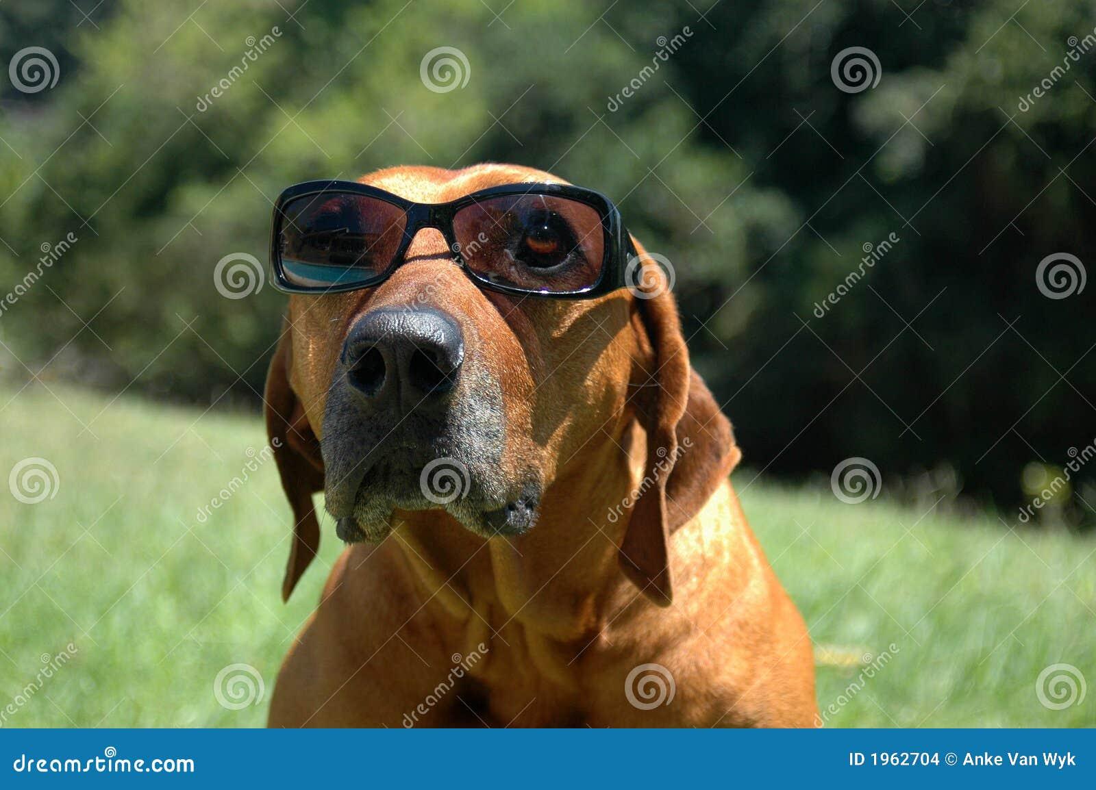 Psi okulary przeciwsłoneczne