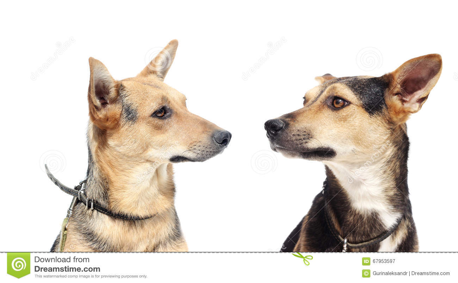 Psi patrzeć