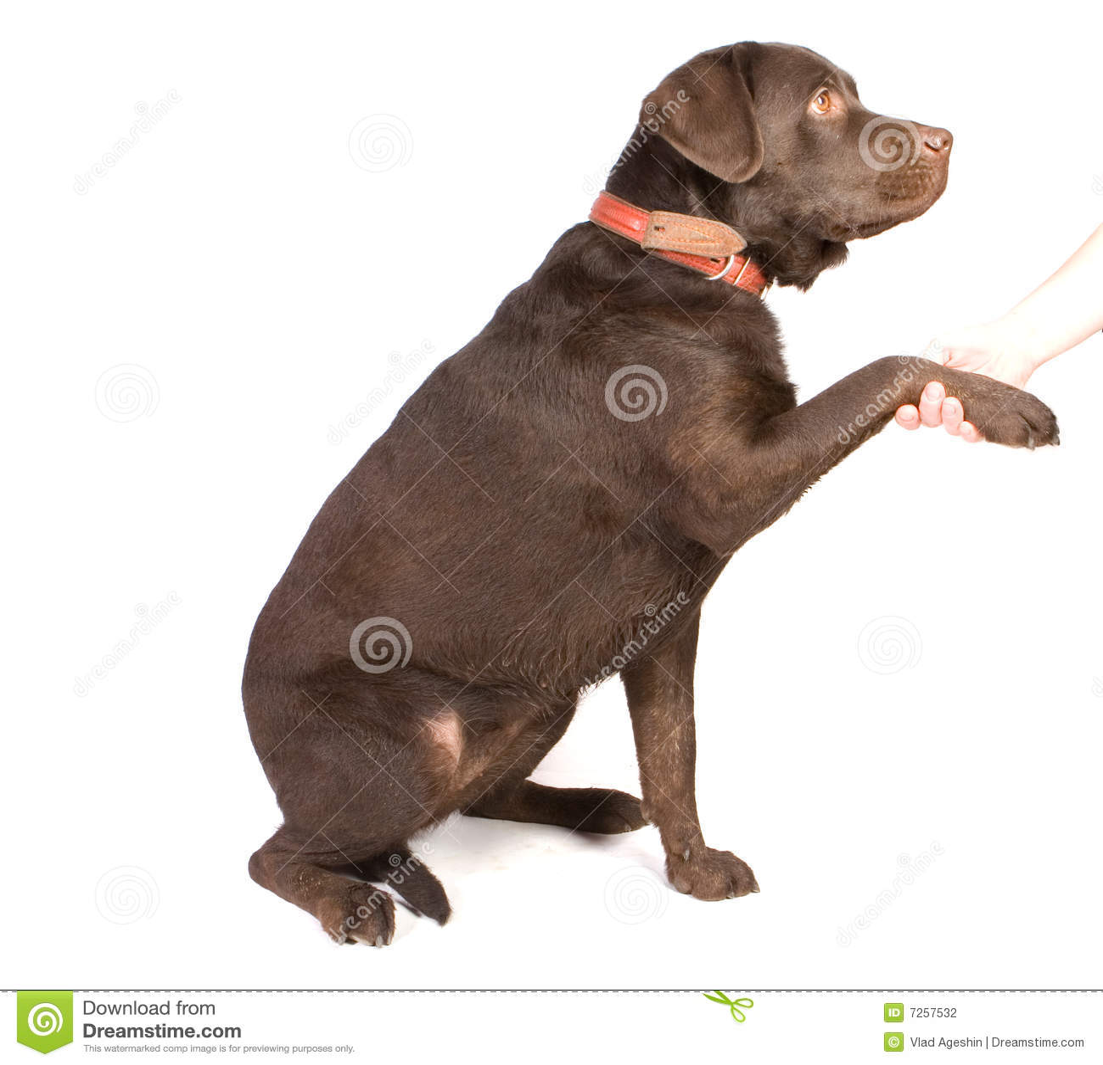 Psi potrząśnięcie