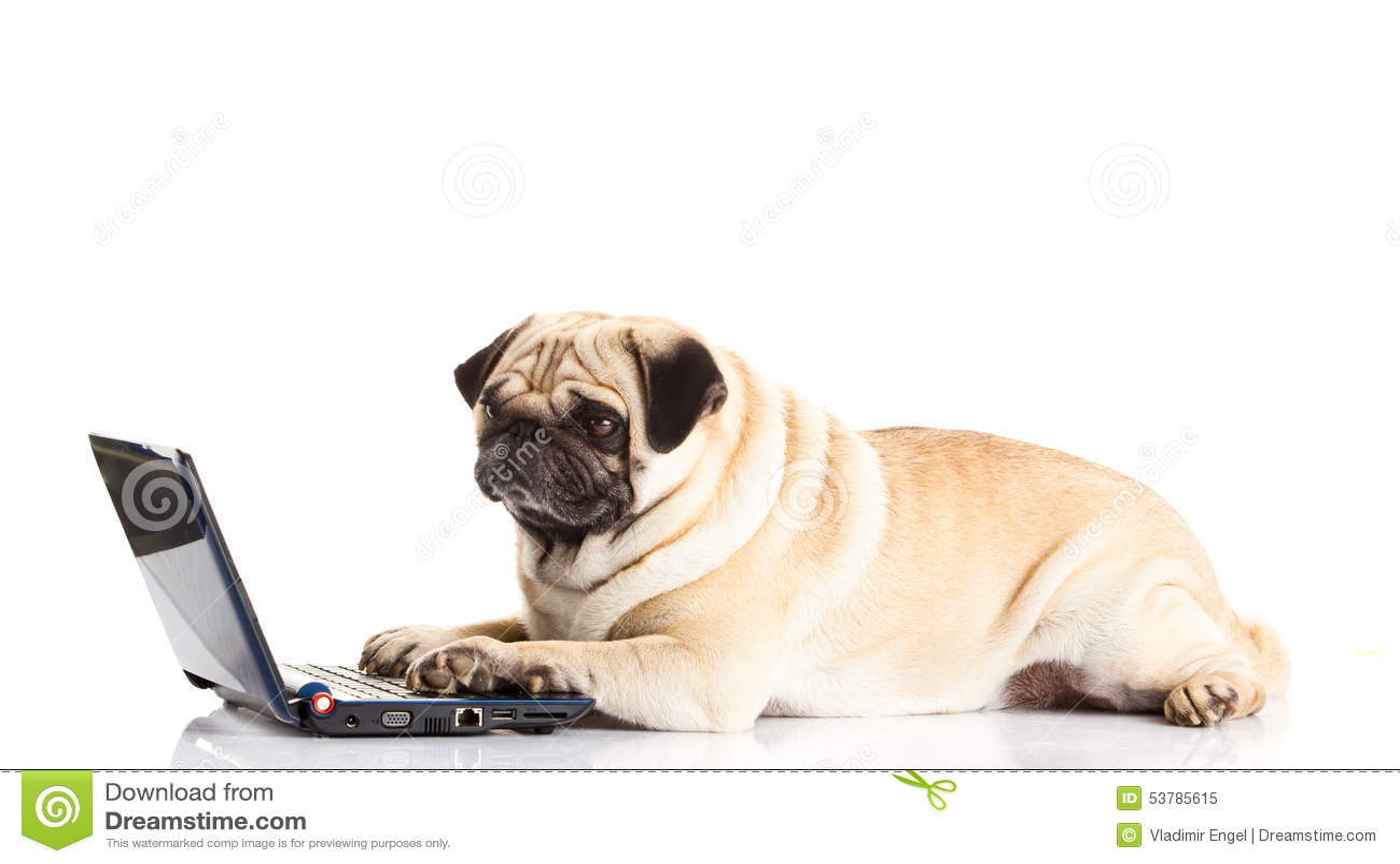 Psi pugdog komputer odizolowywający na białego tło laptopu nowożytnej technologii