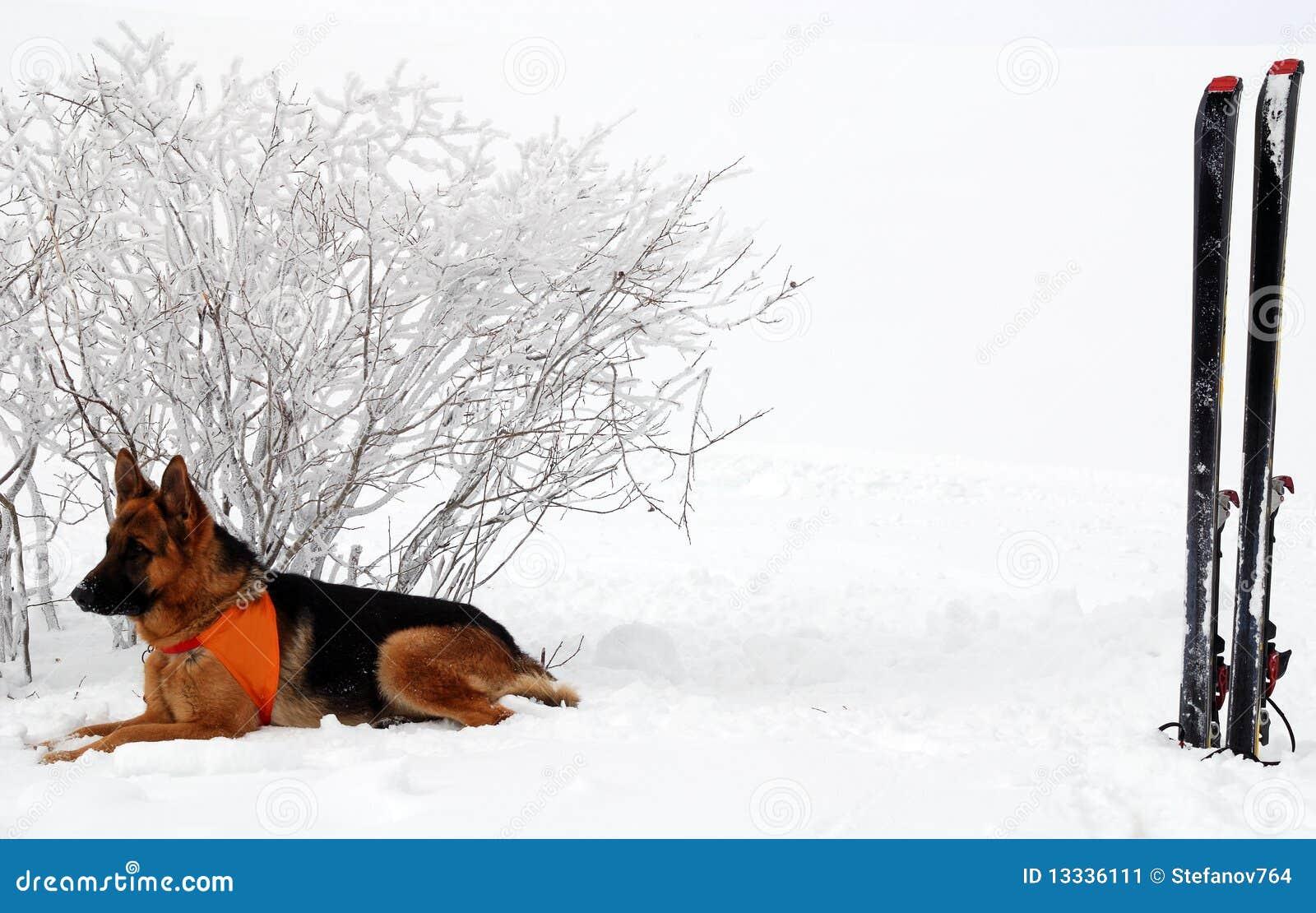 Psi ratownik