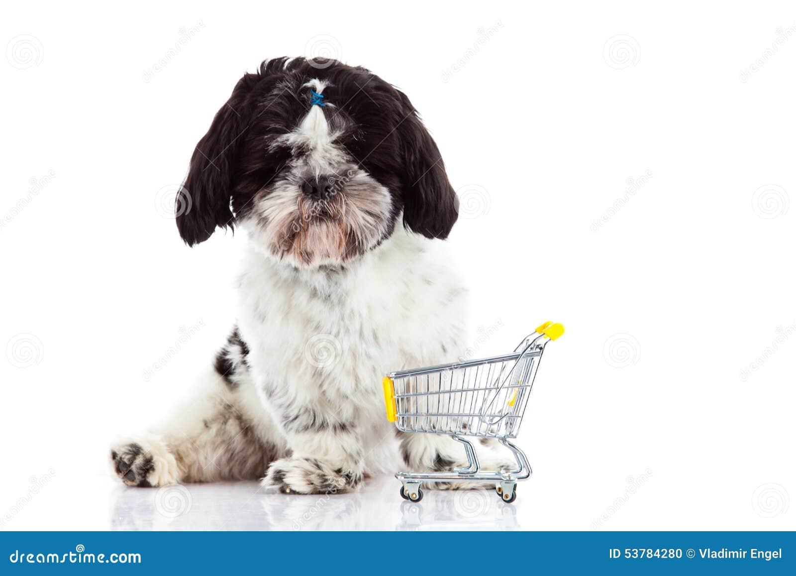 Psi Shih tzu z zakupy trolly odizolowywającym na białym tło psa zwierze domowy
