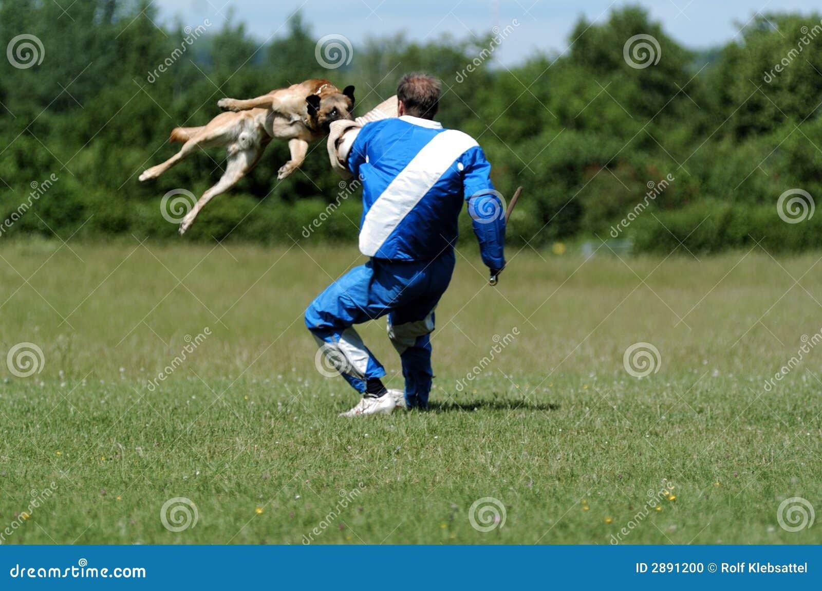 Psi sportu