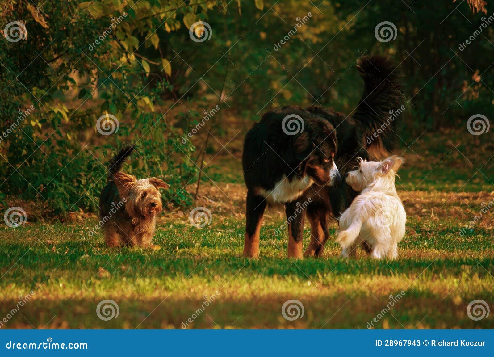 Psi spotkanie