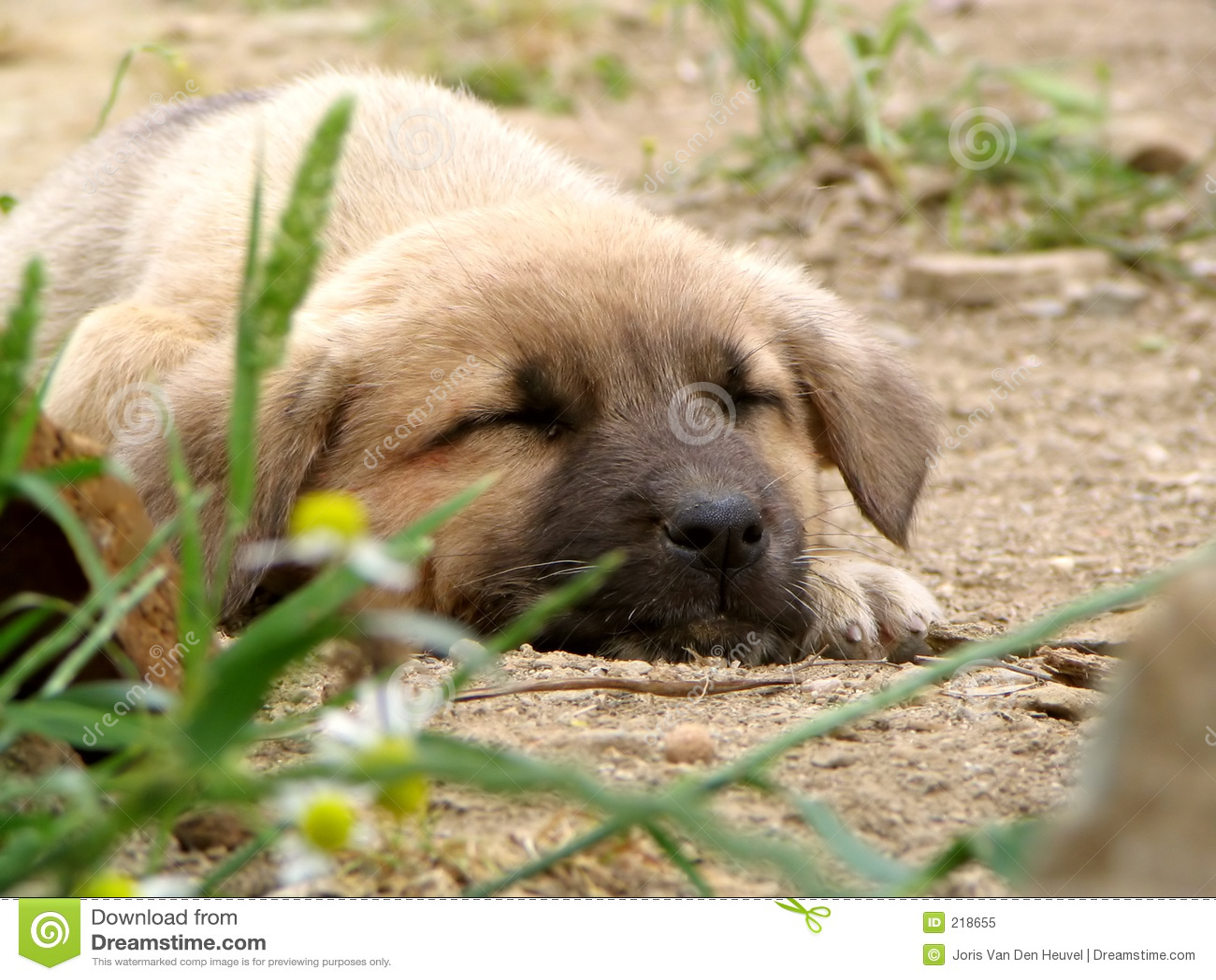 Psi szczeniaka śpi