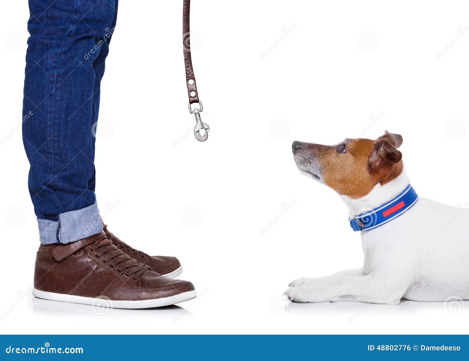 Psi właściciel