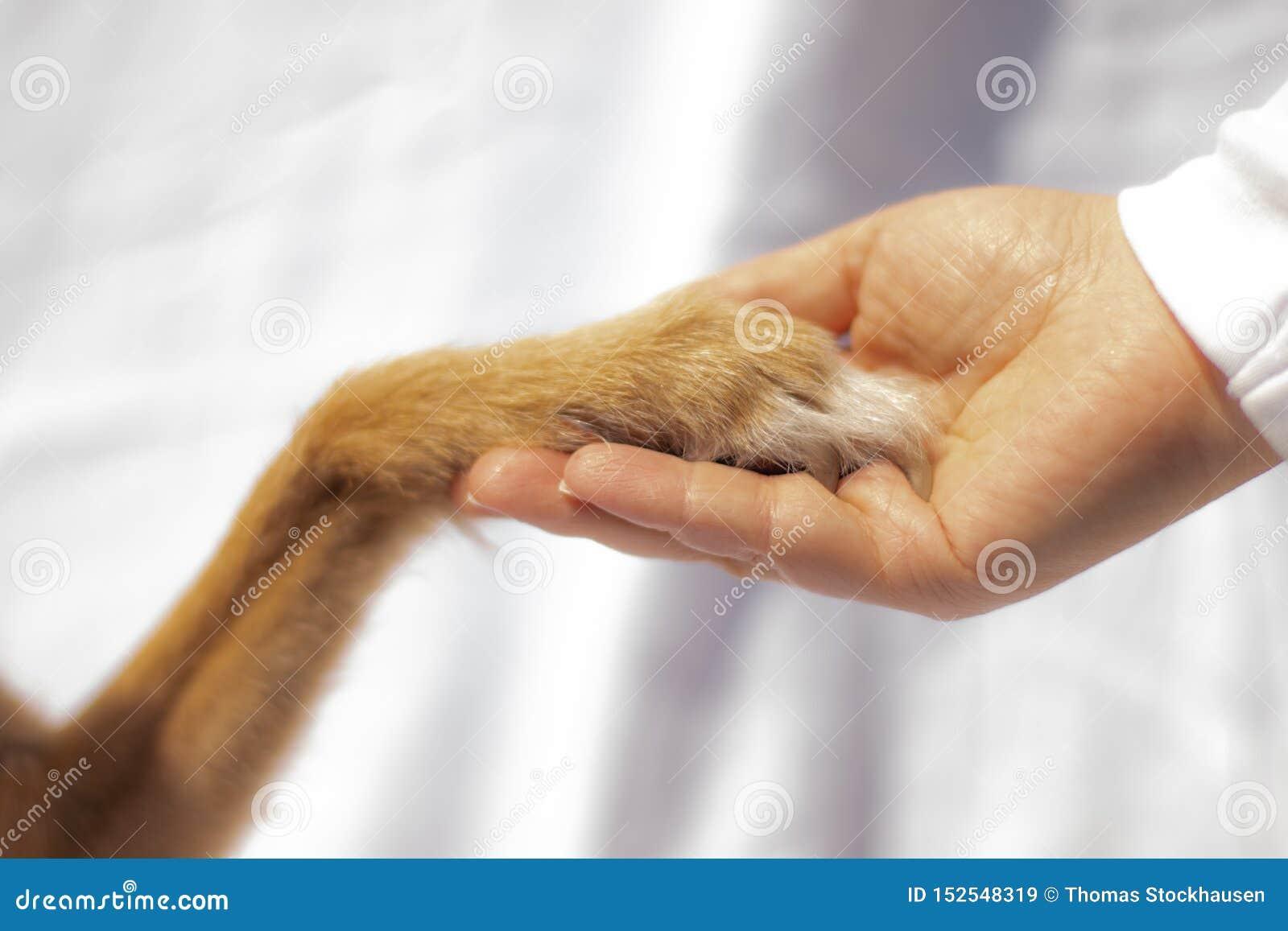 Psia łapa dotyka ludzką rękę