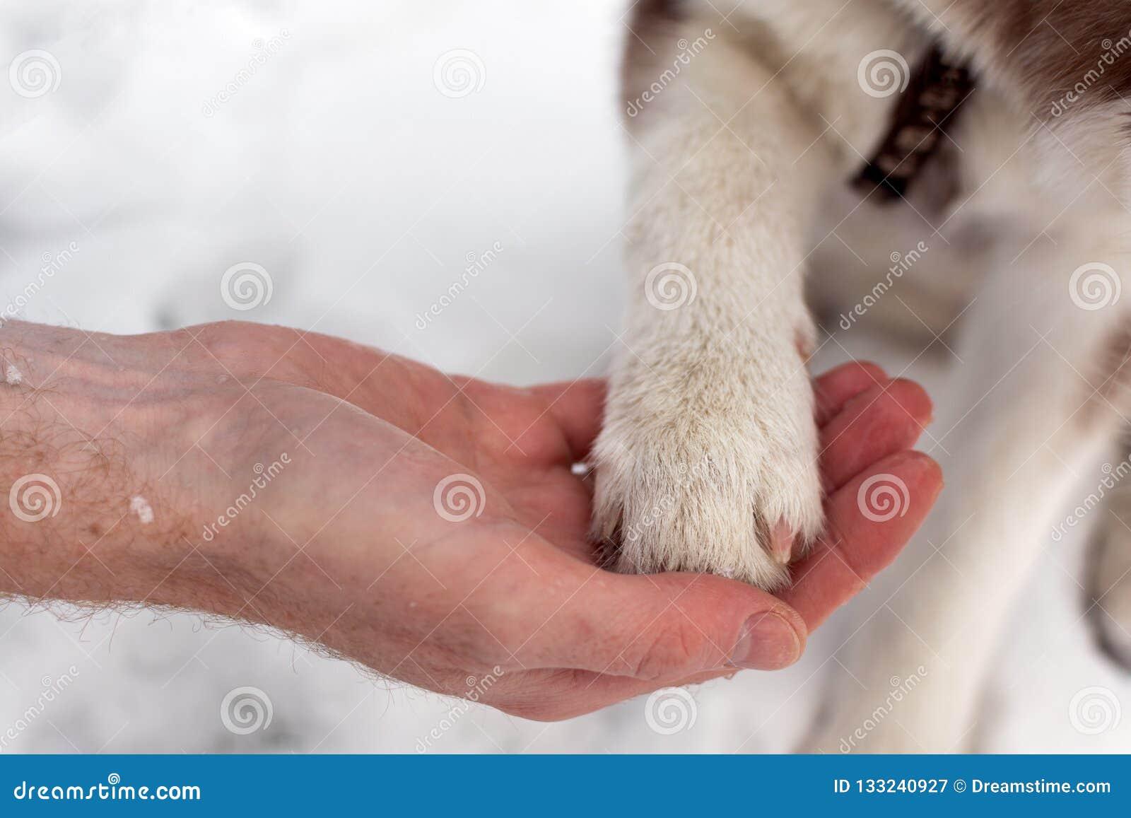 Psia łapa w ludzkiej ręce