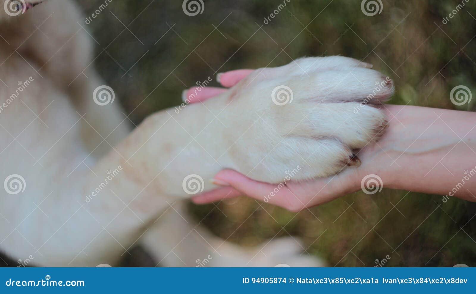 Psia łapa w ręce