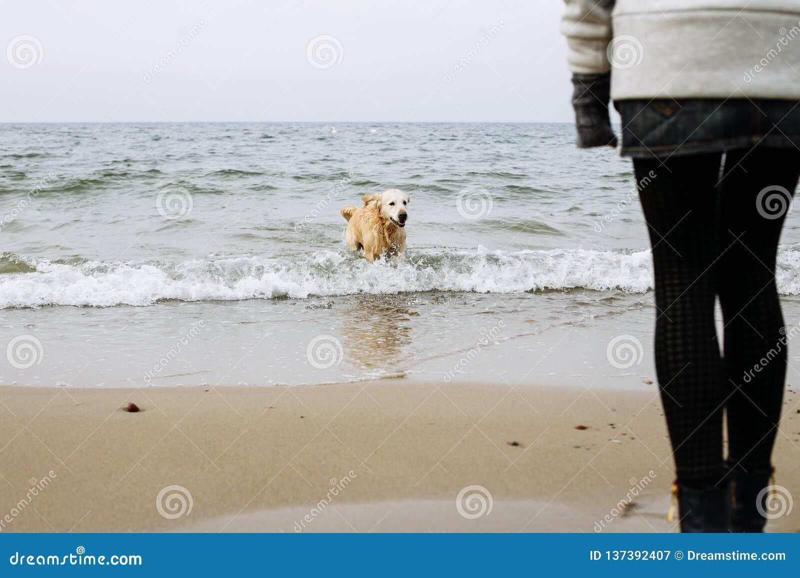 Psia bawić się woda