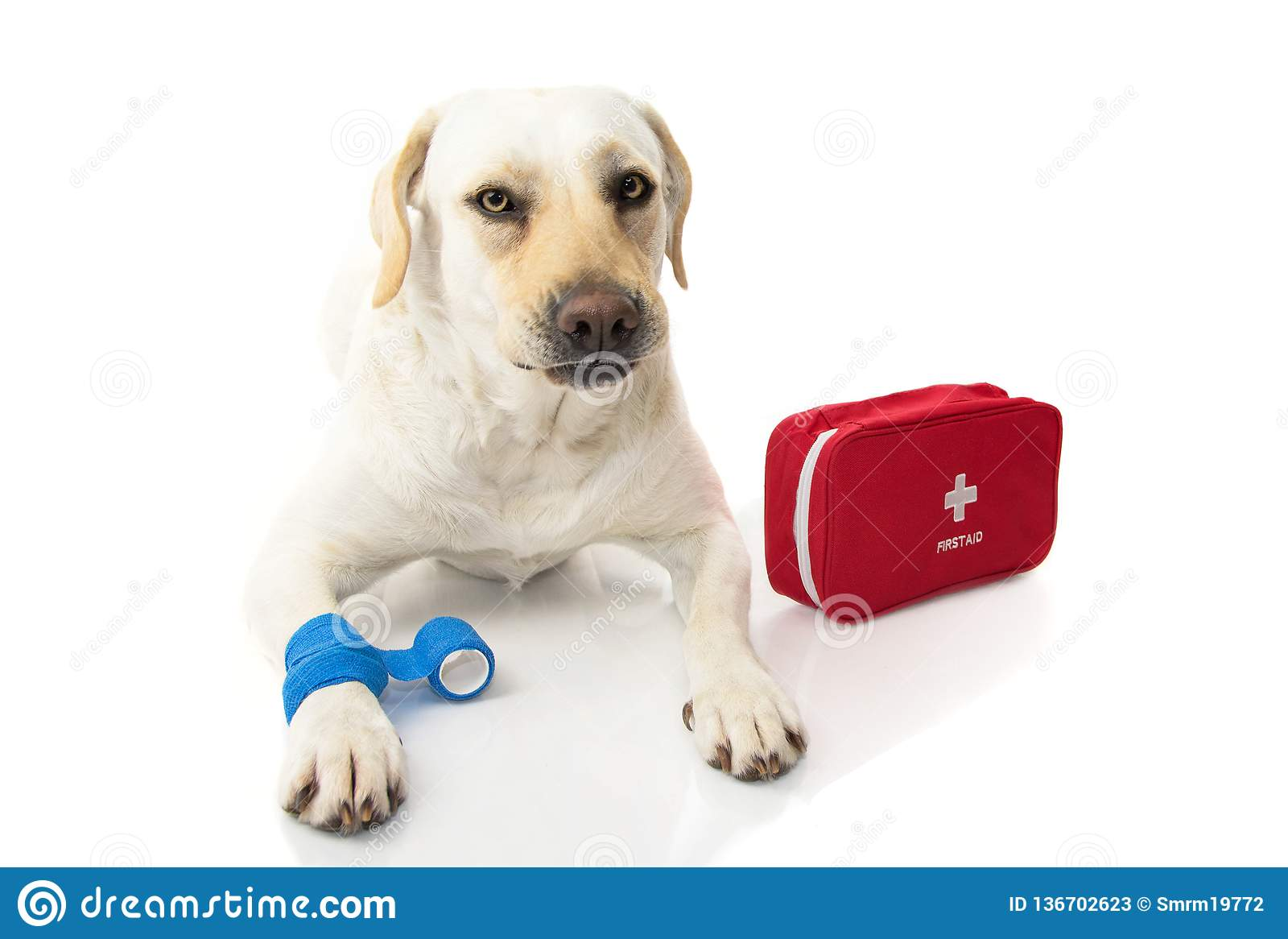 Psia choroby LABRADORA ŁGARSKI puszek Z, FIRT pomocy zestaw, nagły wypadek PIESZO I LUB Robienie twarzy