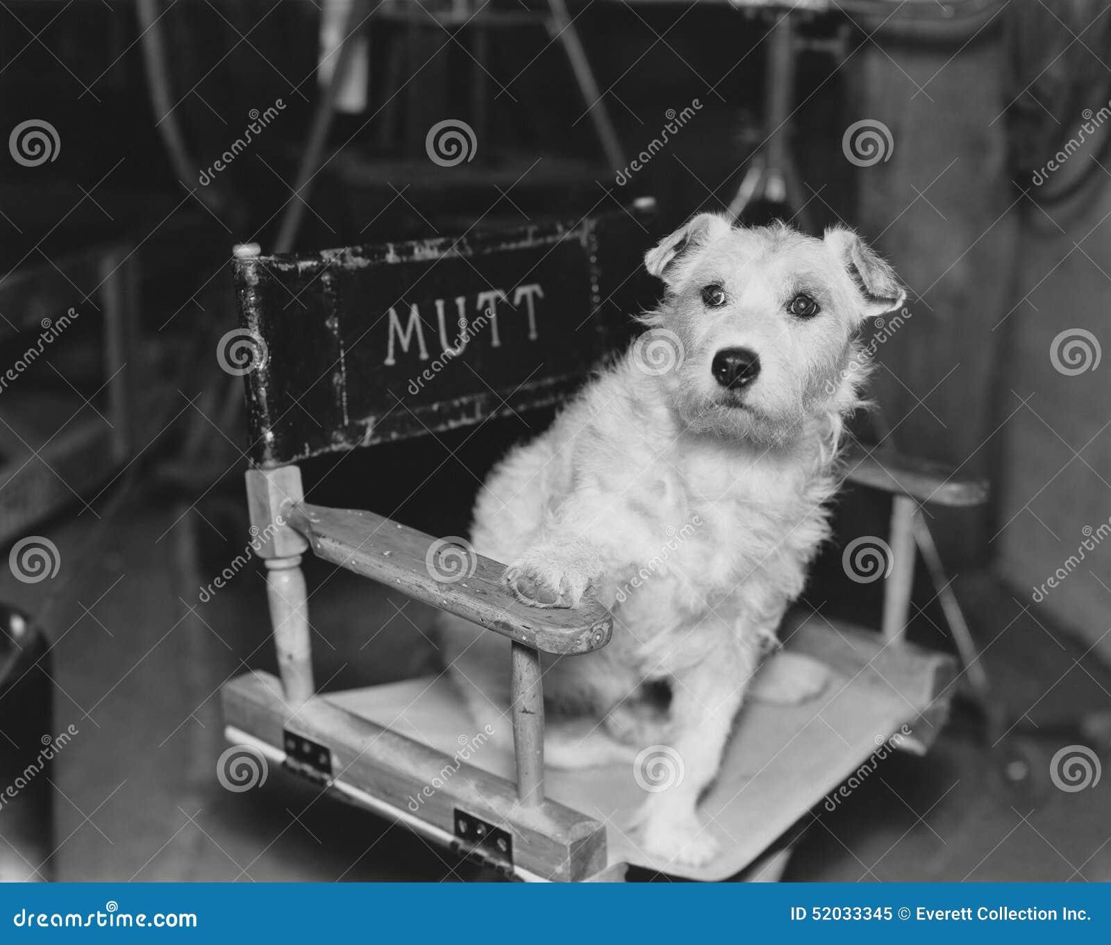 Psia gwiazda