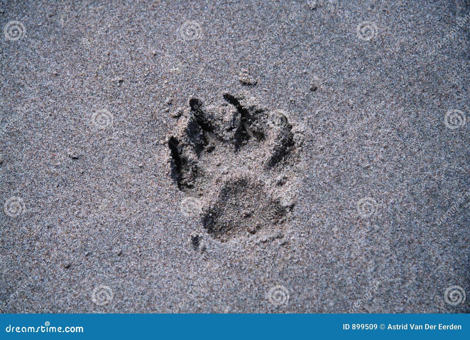 Psia plażowa paw