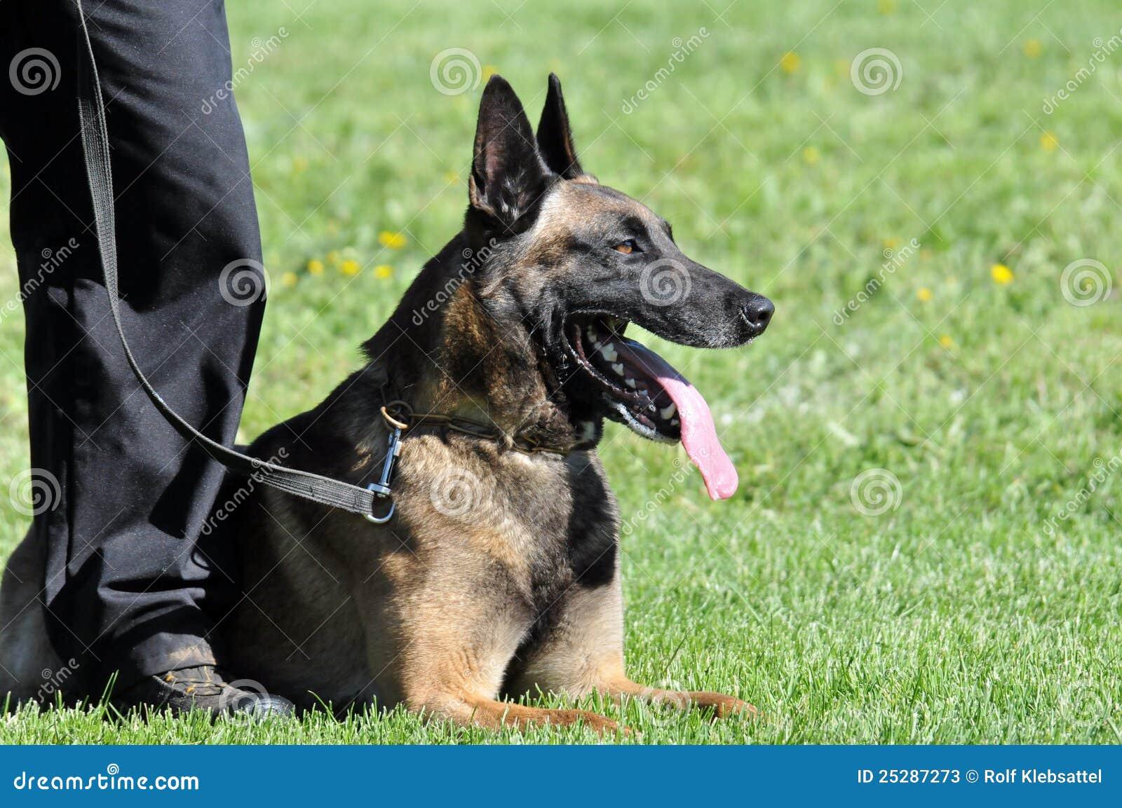 Psia policja