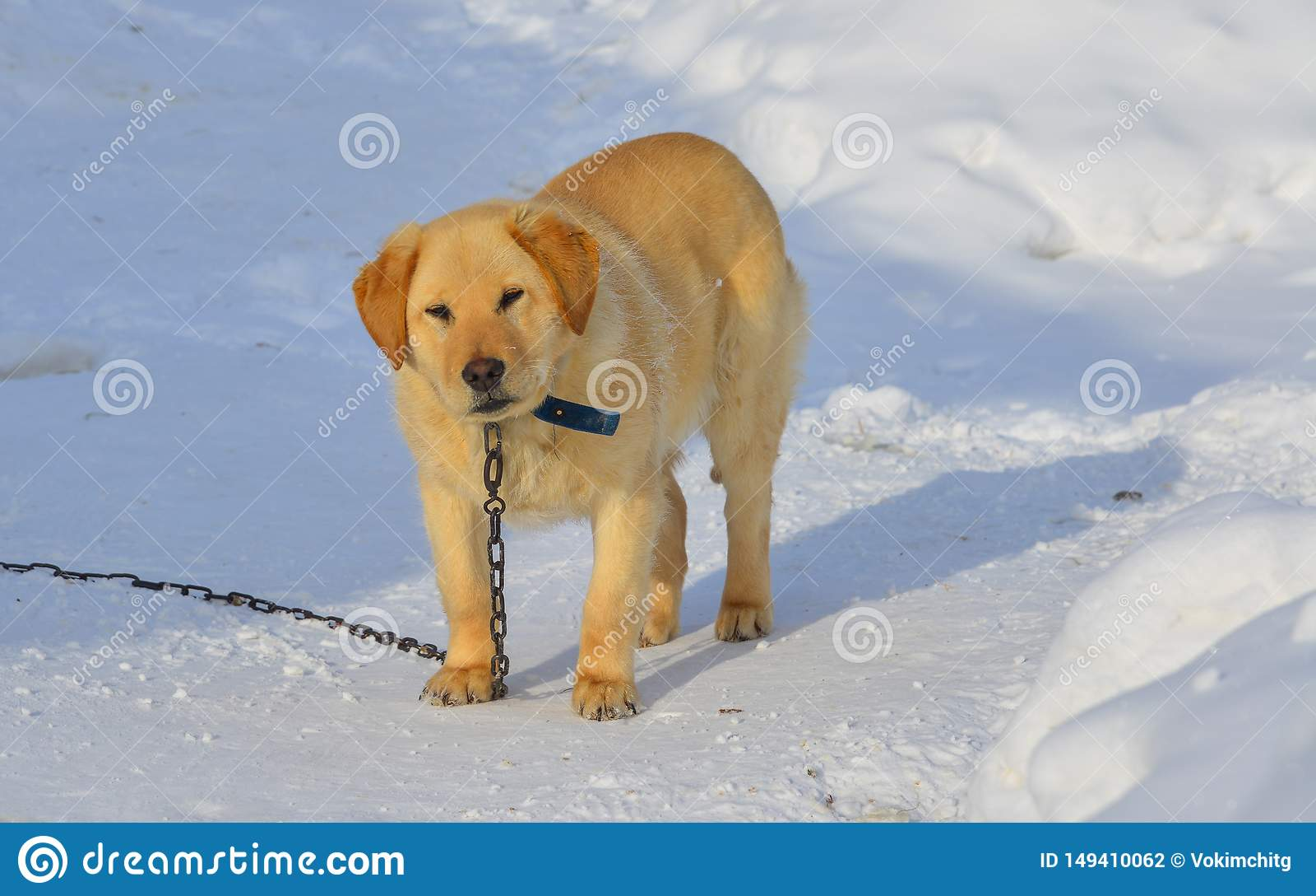 Psia pozycja na śniegu