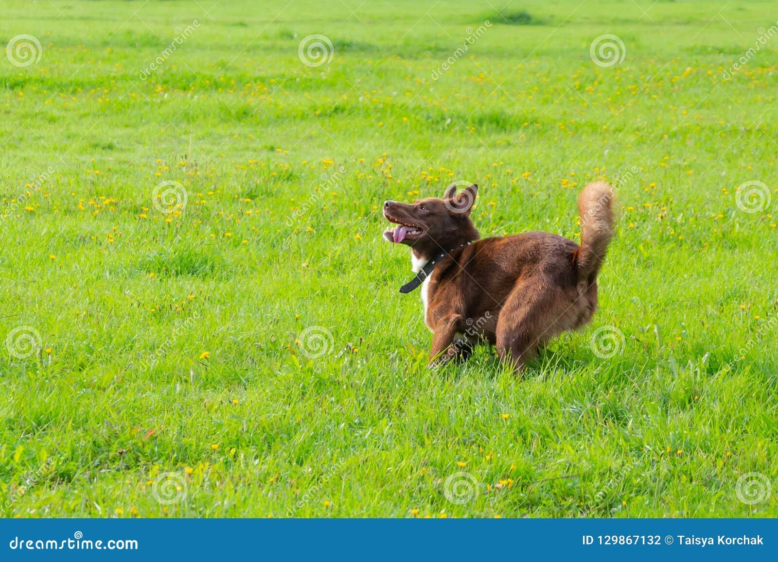 Psia traken połówka