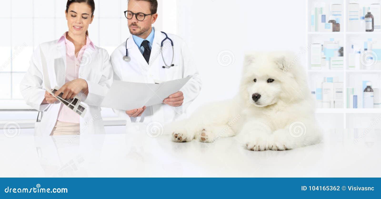 Psia weterynaryjna egzaminacyjna weterynarz rada pr i egzaminy