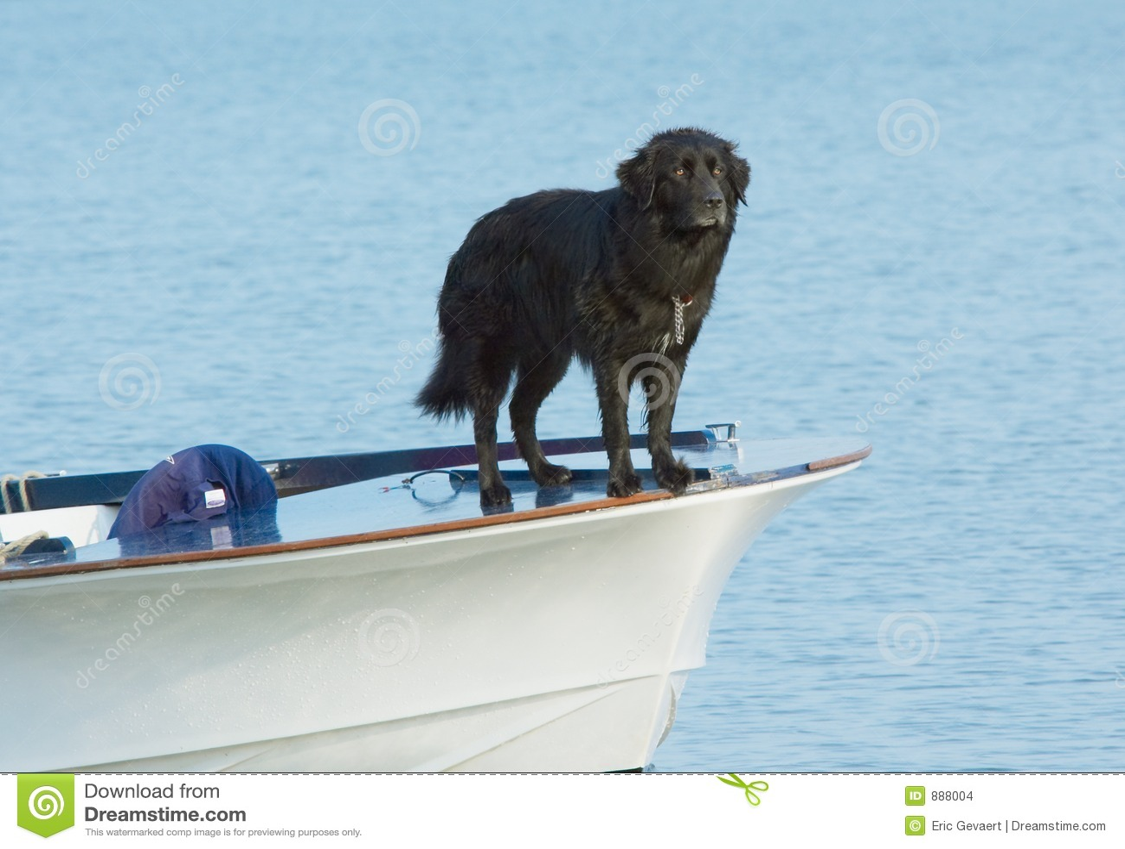 Psia wody