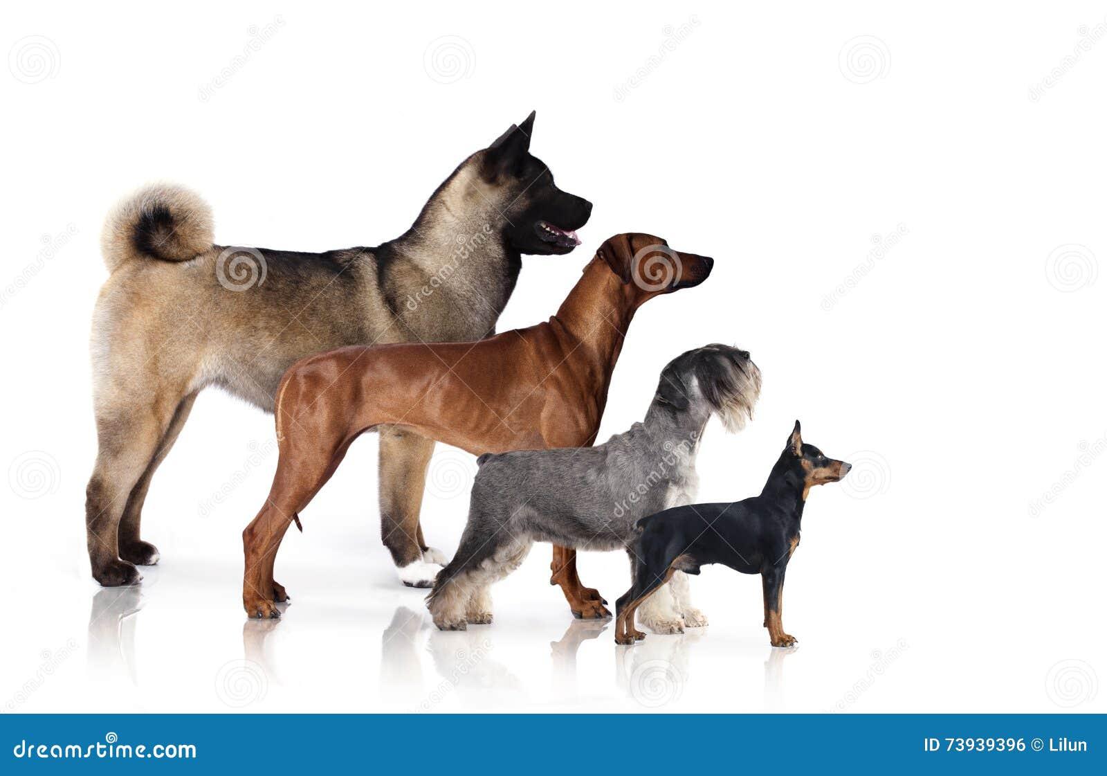 Psy grupy cywilizacji świata natury rosyjskiego